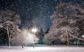 Invierno, árboles, lámpara, cubierto de nieve, noche