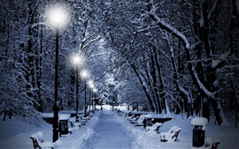 Invierno, árboles, nieve gruesa, lámpara, camino