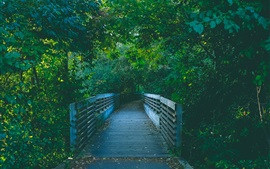 Preview wallpaper Wood bridge, path, trees, park