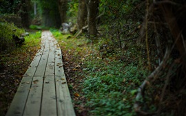 Preview wallpaper Wooden path, leaves, blurry
