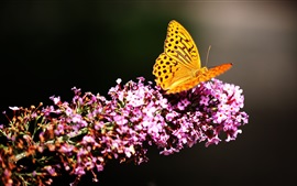 Preview wallpaper Yellow butterfly, pink flowers, black background