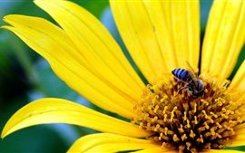 Preview wallpaper Yellow flower, petals, bee, insect