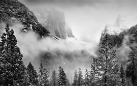 Национальный парк Йосемити, США, деревья, горы, снег, туман, зима