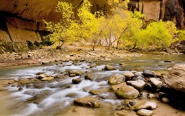 Zion National Park, creek, stones, trees, autumn, USA