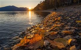 Reserva natural de Altai, lago Teletskoye, hojas amarillas, otoño, puesta del sol, Rusia