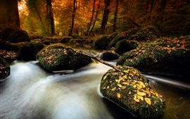 Preview wallpaper Autumn, stones, moss, stream, leaves, forest