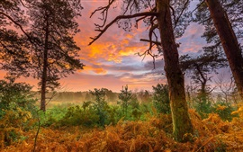 Autumn sunset, trees, grass, clouds, red sky