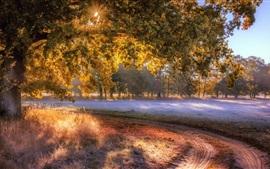 Otoño, árboles, hierba, rayos del sol