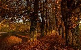 Outono, árvores, folhas, estrada, luz do sol