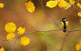 Preview wallpaper Autumn, twigs, yellow leaves, bird