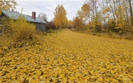 Preview wallpaper Autumn, yellow leaves, trees, road, house