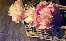 Cesta, peônias cor-de-rosa, luz