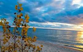 Preview wallpaper Beach, sea, tree, yellow leaves, clouds, sunset