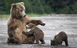 Ours, famille, maman, oursons