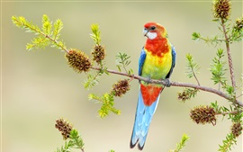 Beautiful parrot, colorful feathers, twigs