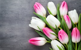 Preview wallpaper Beautiful tulips, pink white petals