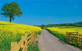 Preview wallpaper Beautiful yellow rapeseed field, fence, blue sky