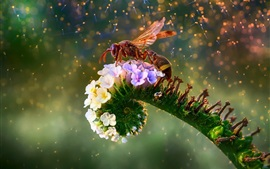 Bee and flowers, beautiful picture