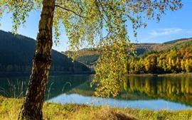 Bélgica, lago, árboles, otoño