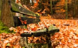 Banco, folhas vermelhas, outono
