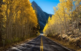 Birch trees, road, mountain, autumn