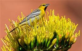 미리보기 배경 화면 새의 꽃 서