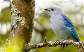 Pássaro, árvore, ramo, fundo desfocado