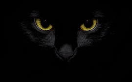 Black cat front view, yellow eyes, darkness background