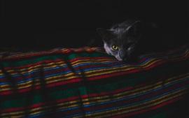 Vorschau des Hintergrundbilder Schwarze Katze in der Dunkelheit