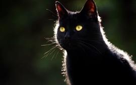 Gato negro, ojos amarillos, contraluz, fondo oscuro