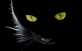 Olhos amarelos do gato preto, fundo preto, luz de fundo