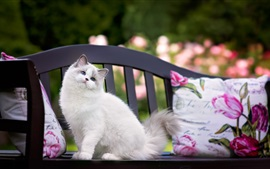 Preview wallpaper Blue eyes cat standing on bench