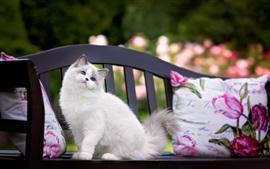 Gato de olhos azuis sentado no banco