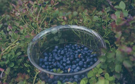 Preview wallpaper Blueberry, glass bowl, plants