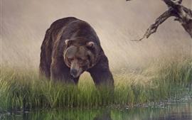 茶色のクマ、草、水、反射