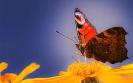 미리보기 배경 화면 나비 클로즈업, 노란 꽃