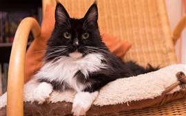Mirada de gato, silla