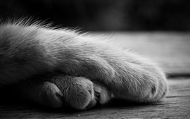 Preview wallpaper Cat paws, black and white picture