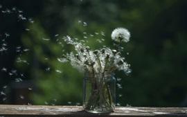 Preview wallpaper Dandelions flying, bottle
