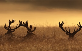 Preview wallpaper Deer, horns, grass, sunset