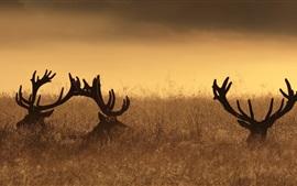 鹿、角、草、日没