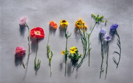Preview wallpaper Different kinds flowers, gray background