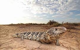Different kinds lizard