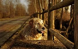 Preview wallpaper Dog, fence, sunshine