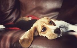 Descansar cão no sofá