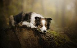 Preview wallpaper Dog rest, stump
