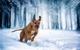 Preview wallpaper Dog running in the snow, winter