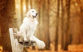 Perro sentarse en el banco, otoño, árboles