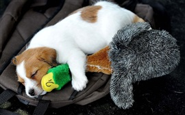 Preview wallpaper Dog sleep, toy duck