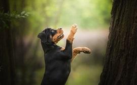 미리보기 배경 화면 개가 나무를 등반하기 위해 서있다.
